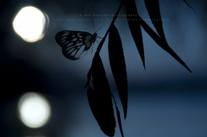 Paisagem Natural/The butterfly counts not months but moments
