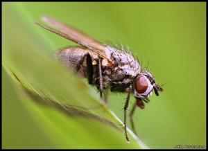 /A mosca.