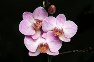 /Jardim de Flores: Três Irmâs