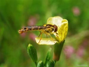 /A flor e o insecto