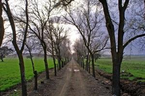Paisagem Natural/Longo Caminho