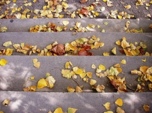 Outros/Quermesse de Outono