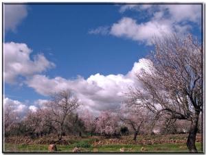Paisagem Natural/As cores do meu Algarve...