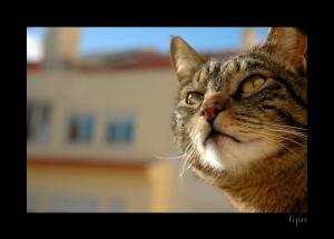 /imponência de gato