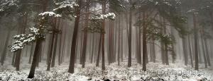 /Cold Mountain