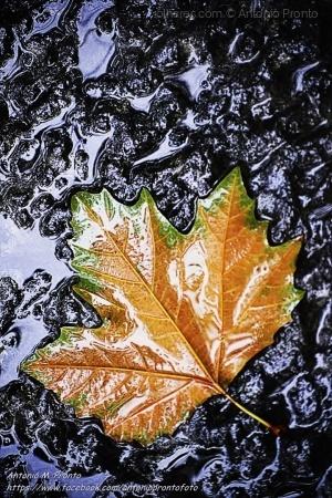 Outros/Dias de chuva - Rainy days