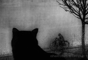 Animais/From a cat's point of view