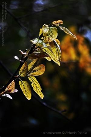 Paisagem Natural/dourado - golden