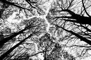 Paisagem Natural/Velhas Árvores