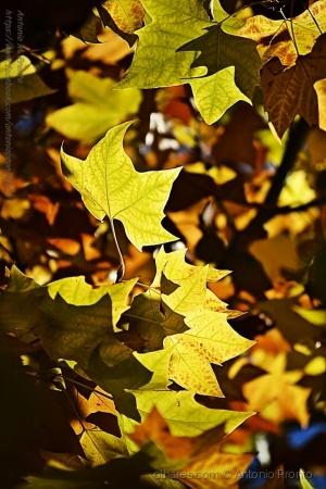 Outros/Outubro Amarelo - Yellow October