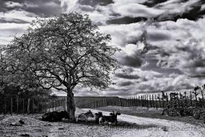 Fotojornalismo/Cercanas de um paraíso seco e quente