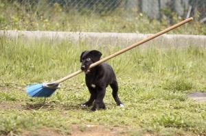 Animais/cão vassoura