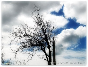 Paisagem Natural/Árvore (Ver descrição)