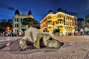 Animais/Praça de Estimação