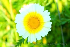 Macro/Simplesmente Flor