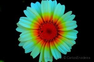 Macro/Flor simples