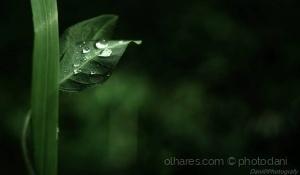 Outros/Simplicidade da Primavera