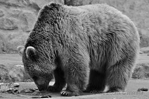 Animais/Urso