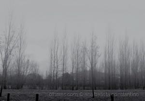 Paisagem Natural/Um dia cinzento