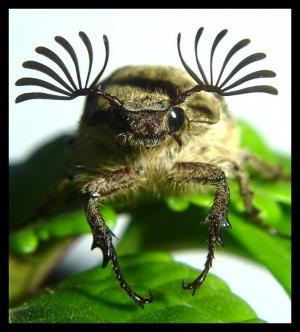 /Escaravelho I