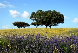 Paisagem Natural/Cheiros da Primavera