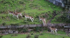 Animais/Veados no Monte da Assunção