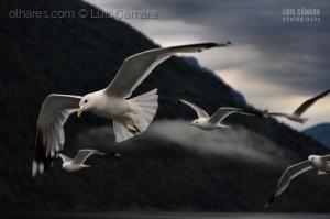 Animais/Song to a Seagull