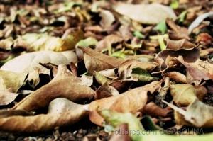 Paisagem Natural/Tapete de folhas
