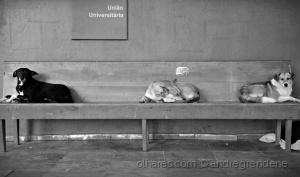 /União universitária