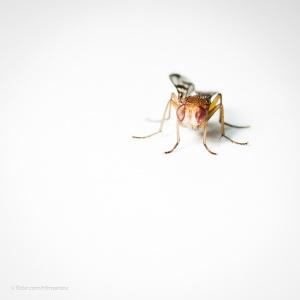 Macro/minimal fly