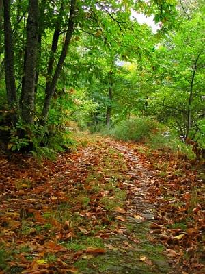 """Outros/""""Caminho de Outono..."""""""