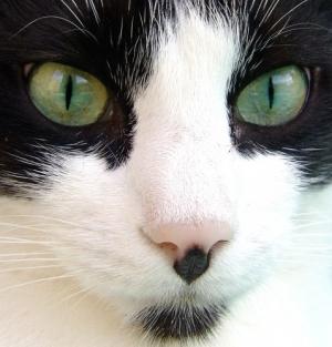 /Verde Olhar
