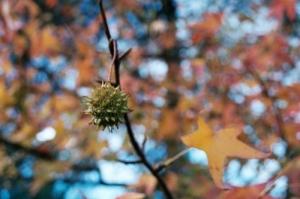 Outros/Outono 2