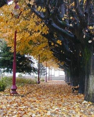 Outros/Outono no Jardim ll