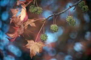 Outros/Peregrinação de outono