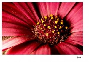 Outros/A flor, entretanto, continuava a sonhar...
