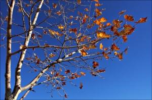 /Em azul e laranja