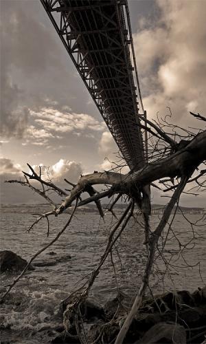 /A ponte que criou raízes
