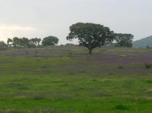 Paisagem Natural/campos de primavera