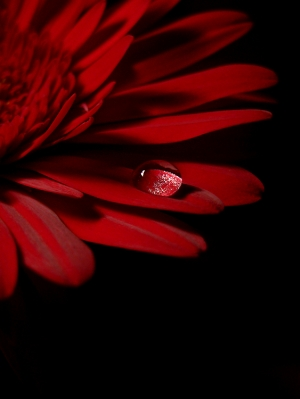 Macro/Tear over red I