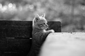Animais/Tigre Dente de Sabre