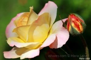 Outros/Rosa do dia!!