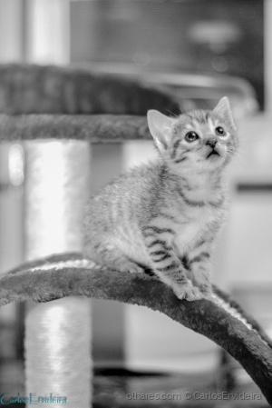 Animais/Miau