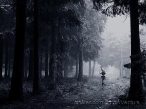 Gentes e Locais/Passeio no bosque.