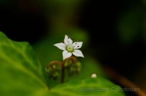 Macro/ternura de primavera