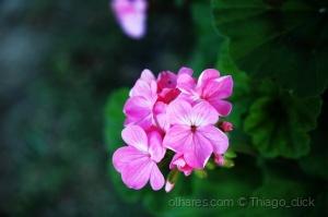 Paisagem Natural/Flores do mato