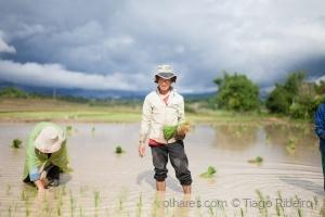 Gentes e Locais/Rice Fields