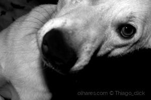 Animais/Coisas de cachorro