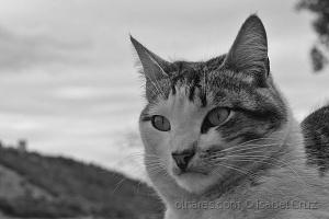 /___ Mr. Cat___