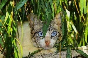 /blue eyes